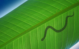 Snake on leave Stock Image