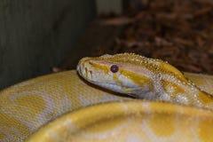 Snake Stock Photo