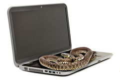 The snake lying on the laptop looking at the screen Stock Image