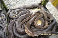 Snake in market sold in Mekong delta, South Vietnam stock images