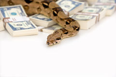 Snake money Royalty Free Stock Images