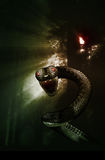 Snake in a mystic forest Stock Images