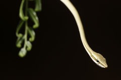 Snake at night royalty free stock photography