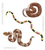 Snake North American Venomous Set Cartoon Vector Illustration. Animal Cartoon EPS10 File Format Stock Photo
