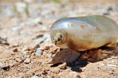Snake in old bottle. A hog nose snake in a bottle in the desert. Family: Colubridae Royalty Free Stock Images
