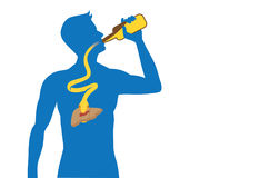 Snake out of alcohol bottle into body to attack liver. Royalty Free Stock Photography
