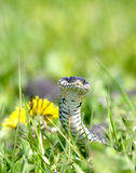 Snake over the green background Royalty Free Stock Images