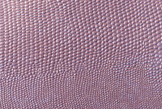 Snake pattern imitation backgraound. Texture royalty free stock images