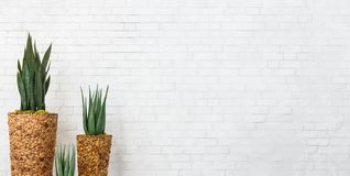 Snake plant and aloe vera succulents in diy pots. Over white brick wall, empty space royalty free stock image