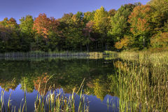 Snake Pond Autumn Stock Images