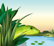 A snake at the pond. Illustration of a snake at the pond Stock Image