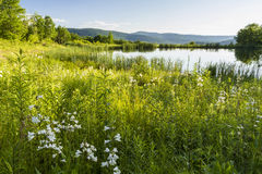 Snake Pond Wildflowers Royalty Free Stock Photography