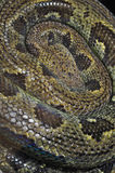 Snake python Royalty Free Stock Photo