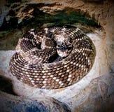 Snake. Reptil reptile Stock Photo