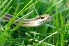 Snake reptile Stock Images