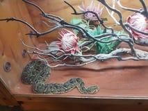 Snake at reptile gardens