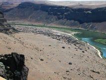 Snake River Greifvögel Lizenzfreie Stockfotografie