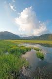 Snake River morning reflection along grassy banks at Alpine Wyoming Stock Photos