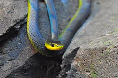 Snake on a rock Stock Image
