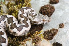 Snake on rock Stock Image