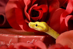 Snake in the roses. Yellow snake over a red roses Royalty Free Stock Photography