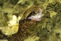 Snake's dinner Stock Photo