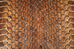 Snake's leather Stock Photos