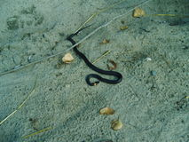 Snake in the sand. Alone or Viper?It is better not to check Royalty Free Stock Image