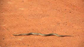 Snake on the sand pad Stock Photos