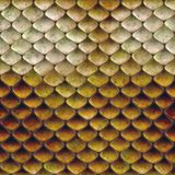 Snake scales background Stock Images