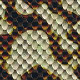 Snake scales background Royalty Free Stock Photography