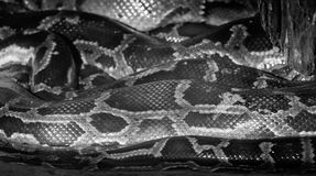 Snake scales. Black and white stock images