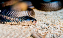Snake and serpent Stock Image