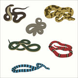 Snake set isolated on white. Rattlesnake, cobra, too, aspid, adder boa python shield-muzzle vector illustration