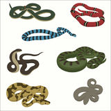 Snake set isolated on white. Vector illustration royalty free illustration