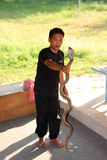 Snake show. THATOOM, SURIN, THAILAND - OCTOBER 30 : The unidentified man in snake show garden is carefully staring at eyes of king cobra snake after catching it stock image
