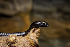 Snake in skansen zoo. Stockholm Royalty Free Stock Images