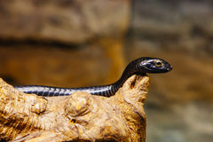 Snake in skansen zoo. Stockholm Royalty Free Stock Image