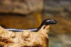 Snake in skansen zoo Royalty Free Stock Image