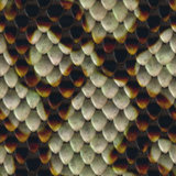 Snake Skin Royalty Free Stock Photos