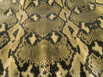 Snake skin. Close up on snake skin Royalty Free Stock Photography