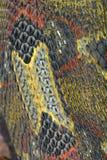 Snake Skin. Scales of Rhinoceros Viper Bitis nasicornis, closeup view vertical Royalty Free Stock Image