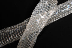 Snake skin 2. Snake skin on a black background Royalty Free Stock Image