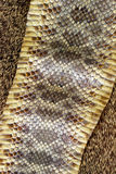 Snake Skin. Close Up Detail Of Diamond Back Rattle Snake Skin Royalty Free Stock Photography