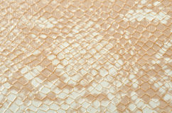 Snake skin Stock Photos