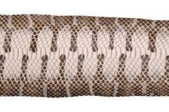 Snake skin Stock Photo