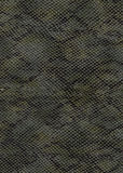 Snake skin background Royalty Free Stock Images