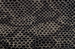 Snake skin background Royalty Free Stock Photography