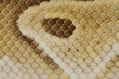 Snake skin for background Stock Photo