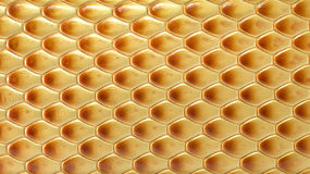 Snake skin background Stock Photos
